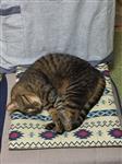 CAT その他