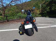 乙コロさんのXL1200NS/アイアン1200 リア画像