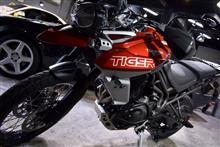 REVOLTさんのTiger800 (タイガー) メイン画像