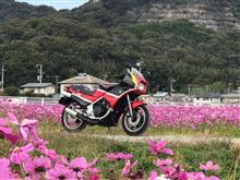 zyosuiさんのKR250S メイン画像