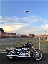 TOKYOドライブさんのXL1200C 左サイド画像