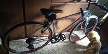 ネ申矢豆さんのCORVETTE  クロスバイク AL-CRB7006-GLOW メイン画像