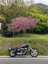 夢吉riderさんのFXDWG_DINA_WideGlide