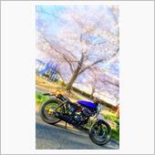 moto-z32さんのボルティ250