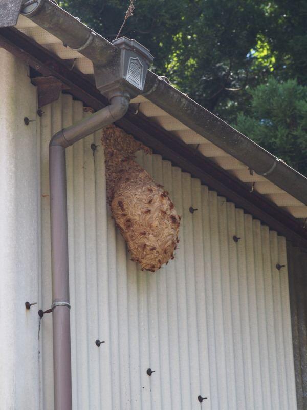 旧国道10号線某所のスズメバチの巣②