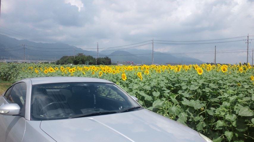 「三重県菰野町のひまわり畑~Z33」lovez33のブログ | lovez33の ...