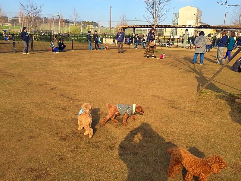 新横浜 公園 ドッグラン