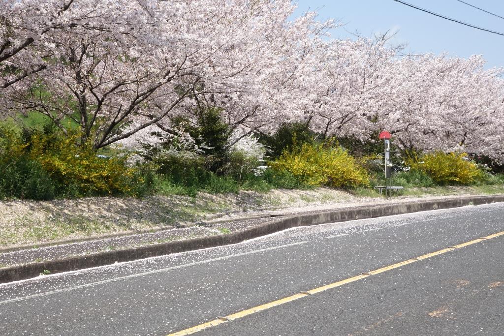 春風駘蕩。」hidepuのブログ | ...