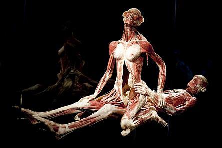 不思議 妊婦 の 人体 展