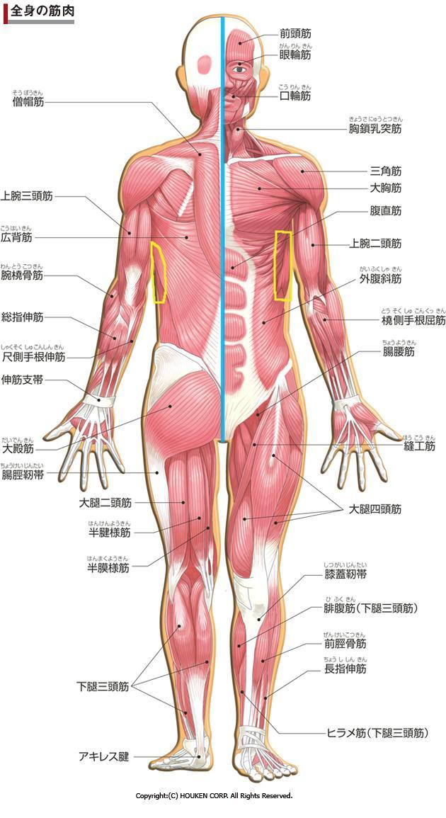 痛い 下 肋骨 左 の
