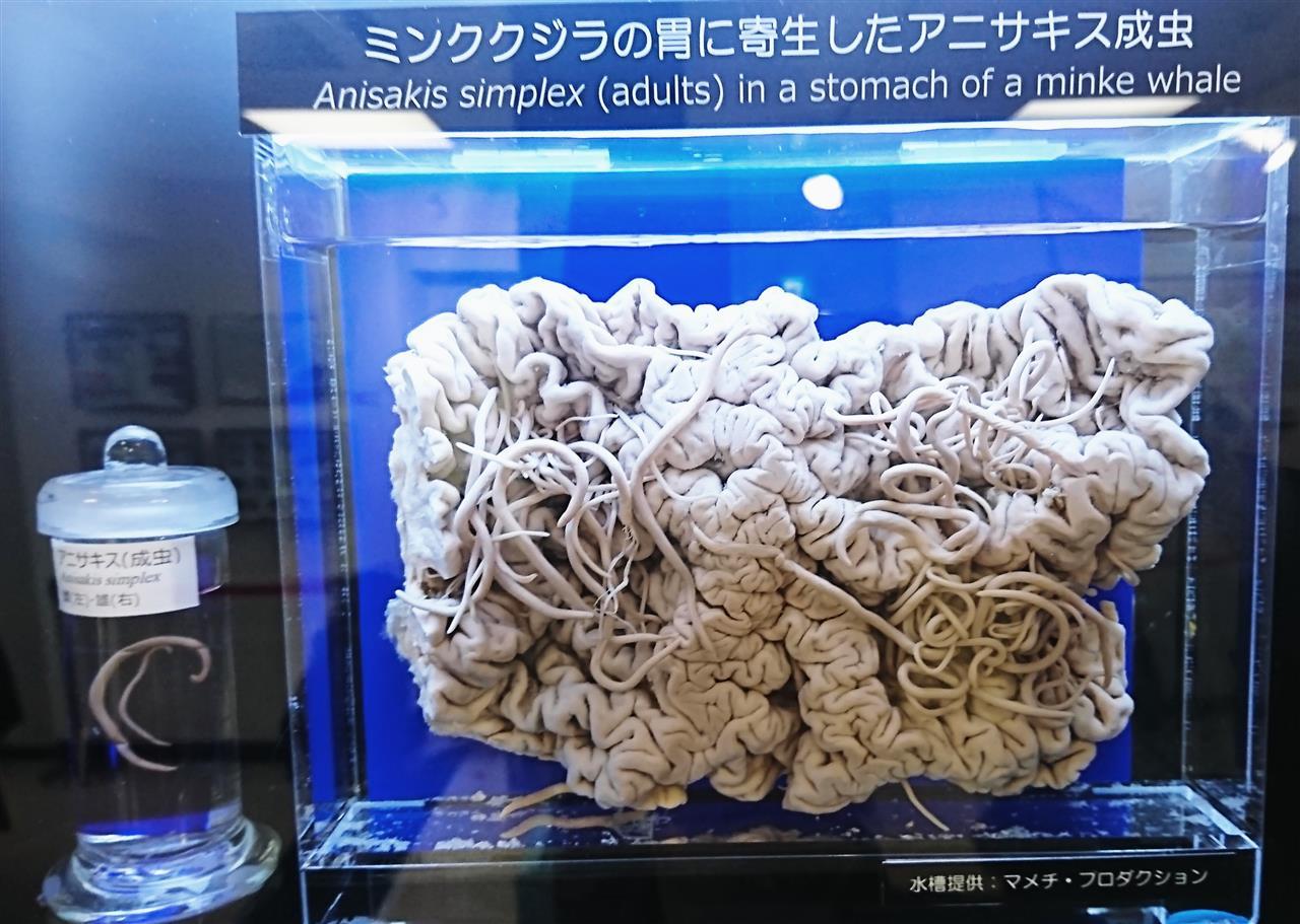 住 血吸虫 日本