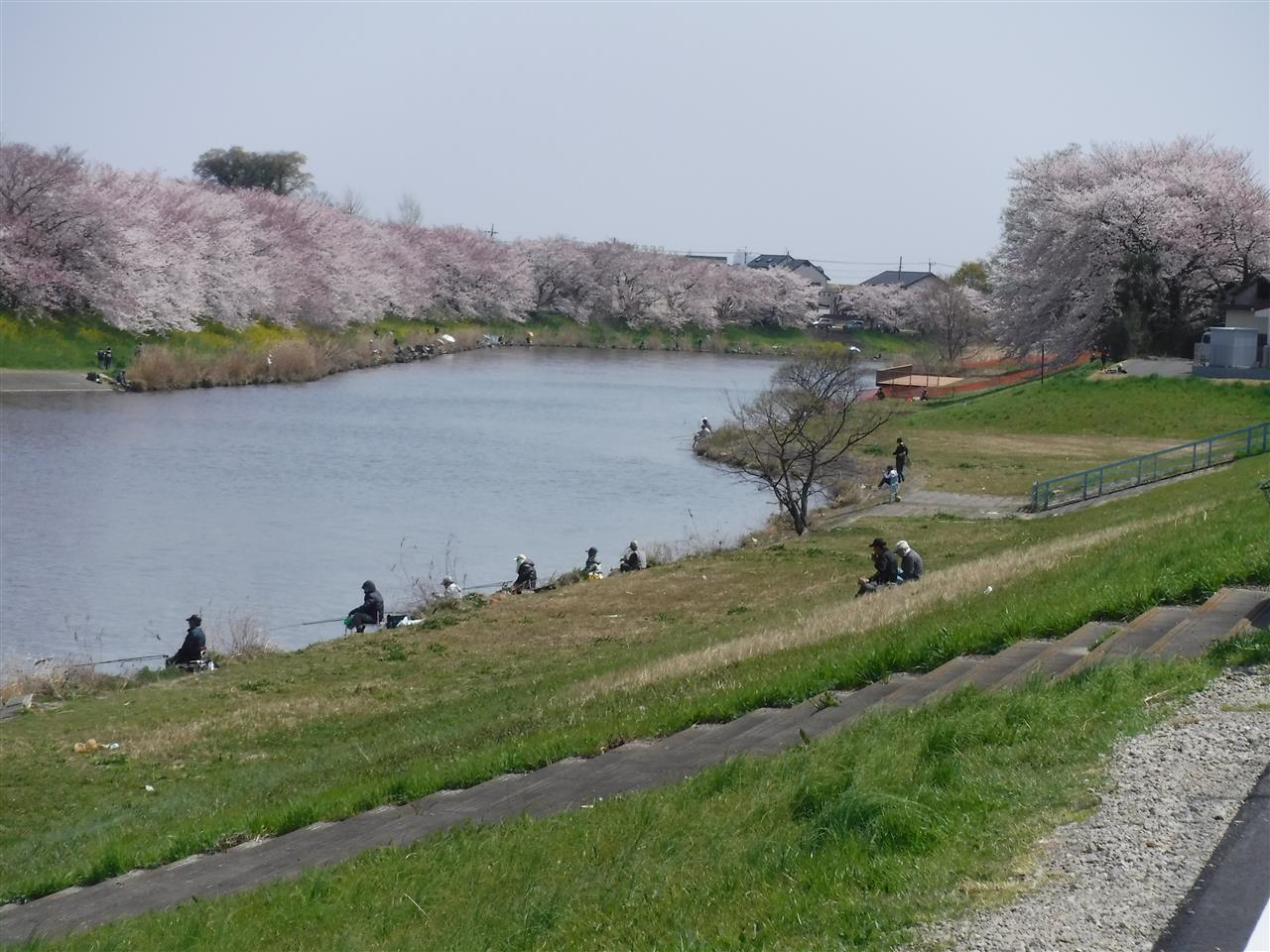自然 公園 沼 びん