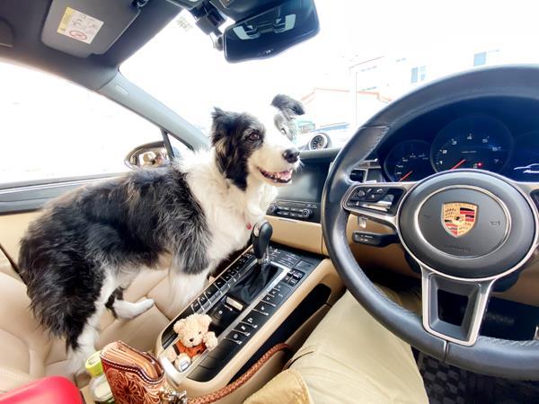 飼い主 中泊 と わんこ 車