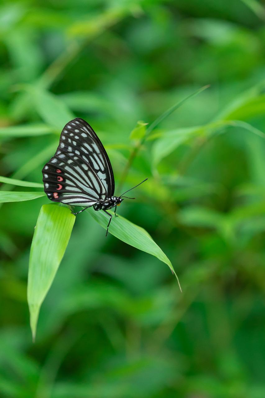 蝶々 デジイチ Canon Tamron 180mm